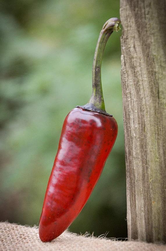 Venezuela Purple Chile Pepper Premium Seed Packet