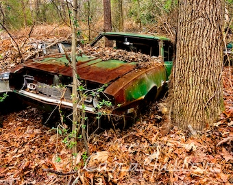 Photograph of a Green 1968 Camaro in the woods by a big tree