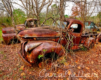 Photograph of a 1941 - 1947 Rusty Chevy Truck with A tree Growing out of the Windshield