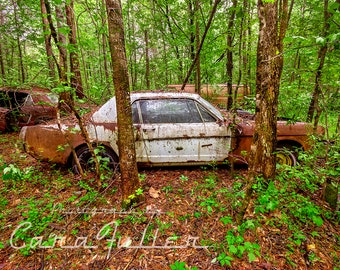 Photograph of a 1965 Rusty White Ford Mustang in the Woods