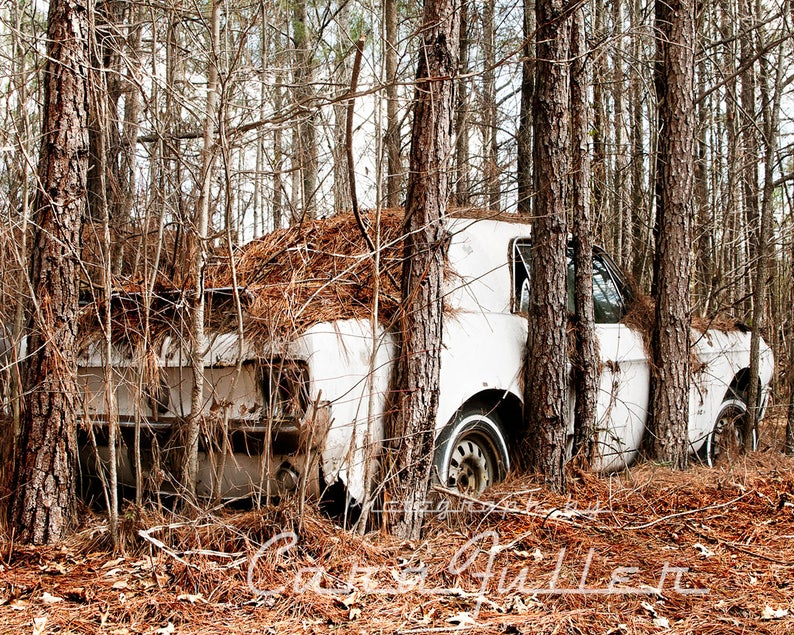 Photograph of a White 1967 Ford Mustang Pinned in by Pine image 0