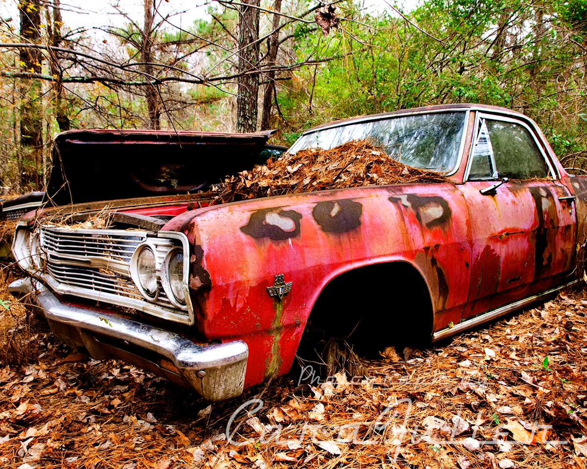 1964 Chevy El Camino In The Woods Photograph Etsy 1954 Zoom