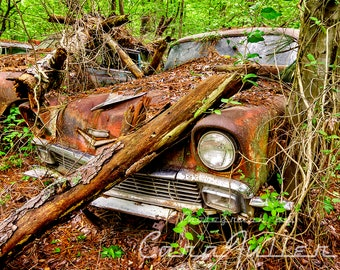 Photograph of a Red 1956 Chevy in the Woods with a Tree Fallen on it