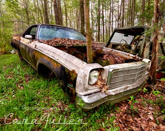 Photograph of a 1974 Chevy El Camino with a Tree Growing through it