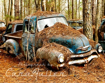Photograph of a 1954 Blue Chevy Truck under Pine Trees