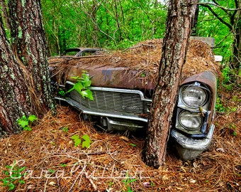 Photograph of a 1968 Cadillac in the Woods By a Tree