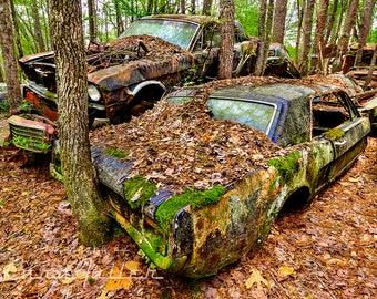 Photograph of a 1965 & 1966 Ford Mustang Stacked in the woods and covered in moss