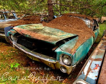 Photograph of a 1928 - 1969 Green AMC AMX in the Woods