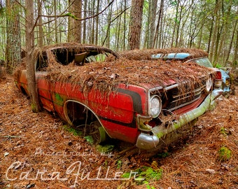 Photograph of a Red 1968 Ford Torino in the Woods