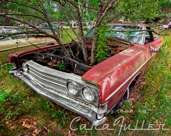 Photograph of a red 1969 Ford Ranchero with a Tree Growing in it