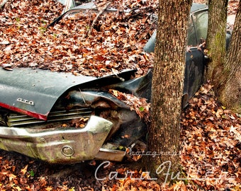 Photograph of the 1967 Pontiac GTO with a Tree growing Over the Door Handle