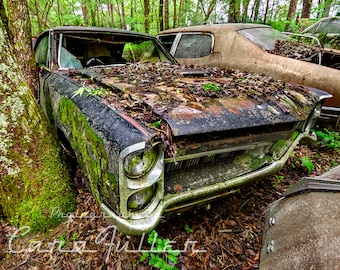 Photograph of a Black 1967 Pontiac GTO in the Woods