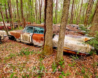 Photograph of a rusty White 1960 Cadillac in The Woods