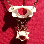 Rodent Vertebrae Necklace