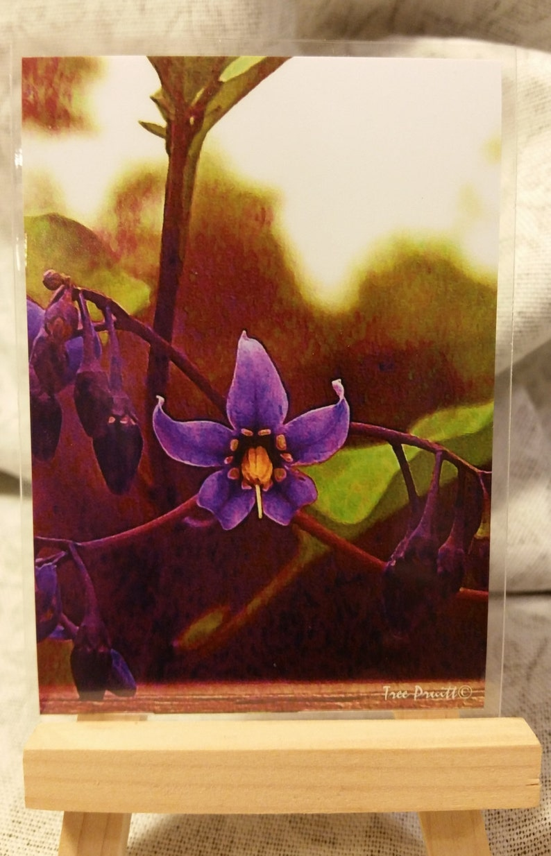 Mystic Nightshade ACEO Mini Art Card Print of Purple Flower with Magic 5 Points