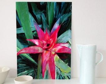A4 Downloadable Botanical Art, Bromeliad Wall Art Print, Australian Flora, Printable Floral Wall Art, Instant Download Art, Gift for Women