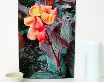 A4 Print, Botanical Art Print, Downloadable Wall Art, Printable Australian Flora, Printable Floral Wall Art, Tropical Flowers, Gift for Her