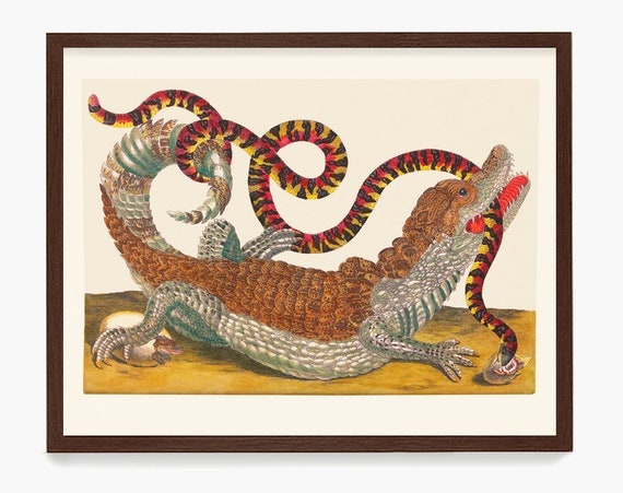 Alligator and Snake Print, Maria Sibylla Merian Artwork, Alligator Art, Snake Art, Maria Sibylla Merian Poster