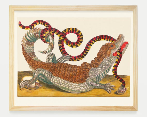 Alligator and Snake - Maria Sibylla Merian Artwork - Alligator Art - Snake Art - Natural History Print - Antique Reptile Poster -