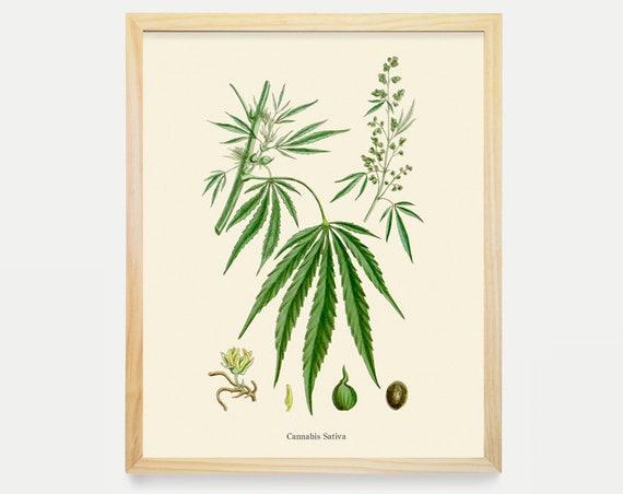 Marijuana Poster - Weed Art - Cannabis Poster - Cannabis Art - Marijuana Print - Cannabis Sativa - Marijauna Art Print - Medicinal Plants
