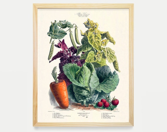 The Vegetable Garden - Garden Art - Garden Illustration - Garden Poster - Kitchen Poster - Kitchen Art - Carrots - Food Poster - Food Art