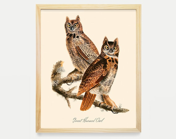 Great Horned Owl - Owl Wall Art - Audubon Bird Print - Ornithological Art Print - Antique Bird - Audubon Art - John James Audubon Art Print