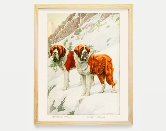 Dog Poster - St. Bernard Art - St. Bernard Poster - Dog Art Prints - Vintage Dog Illustration - Dog Wall Art - Antique Dog Art