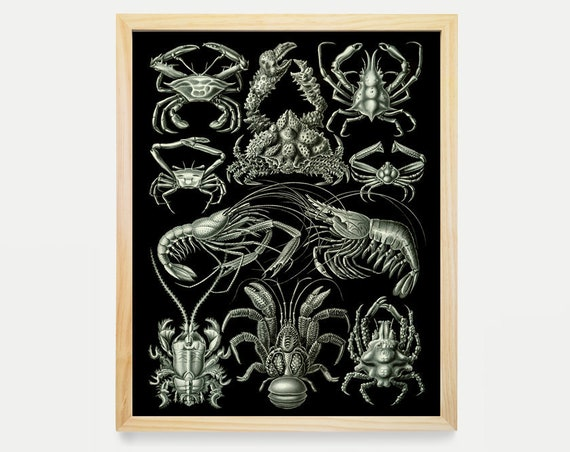 Shell Fish - Crab - Shrimp - Natural History Illustration - Ernst Haeckel - Ocean Art - Aquatic Life - Ocean Poster - Ocean Wall Art