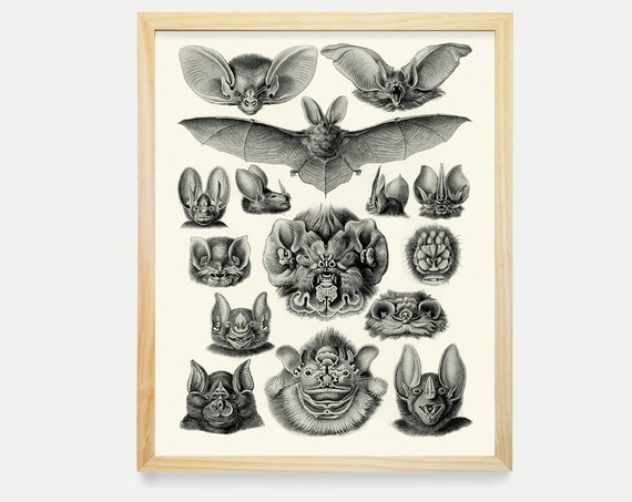 Bats - Bat Poster - Bat Illustration- Natural History Illustration - Ernst Haeckel - Cave - Art Print - Bat Art - Vintage Art - Gothic Art