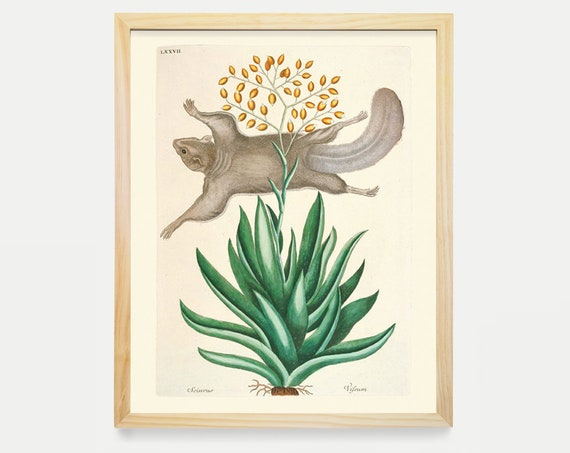 Flying Squirrel - Hand Colored - Historical Illustration - Antique Prints - Natural History Art