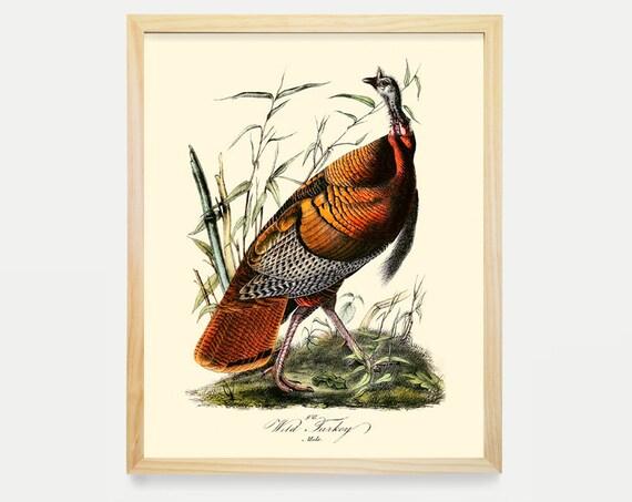 Turkey - Wild Turkey Poster -  Audubon Art - John James Audubon Art Print - Audubon Poster - Bird Art - Bird Print - Bird Poster