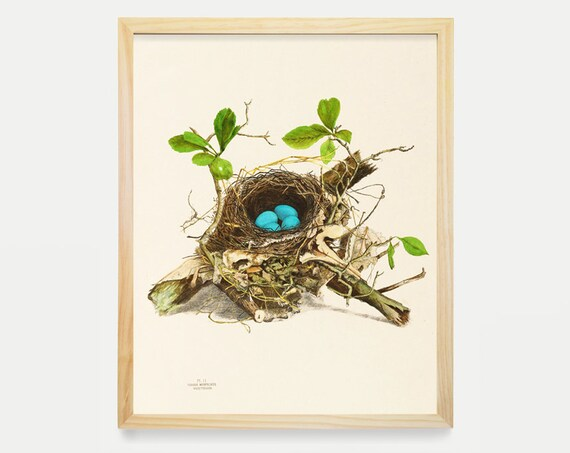 Wood Thrush Bird Nest Victorian Illustration Bird Art Vintage Prints Antique Nature Print Natural History Art