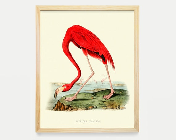 Flamingo Poster, Audubon Flamingo Print, Audubon Art, Animal Poster, Bird Poster, Flamingo Art, Flamingo gift, Florida Decor, Bird Art