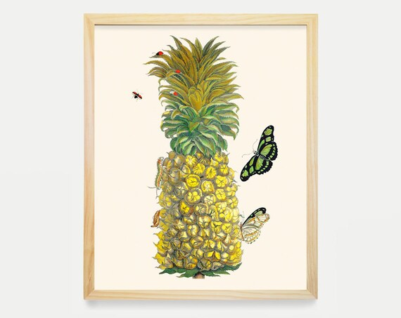 Pineapple Art Print - Maria Sibylla Merian Artwork - Fruit Art - Butterflies - Antique Fruit Poster - Kitchen Wall Art - Pineapple Poster