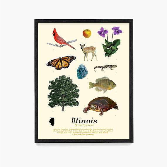Illinois State Symbols Poster, Illinois Art, Illinois Poster, Illinois Wall Art, Illinois Decor, Illinois Home, Chicago Art, Chicago Poster