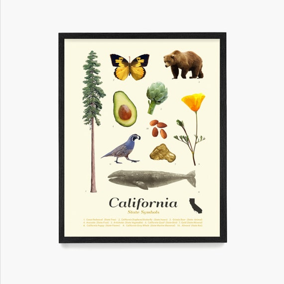 California State Symbols Poster, California Art, California Poster, California Wall Art, California Decor, Los Angeles, San Francisco