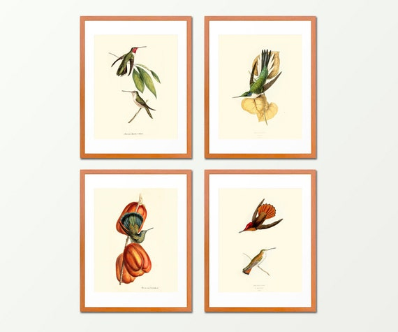 Hummingbirds - Set of 4 Prints - Antique Nature Print - Bathroom Wall Art - Natural History - Ocean - Beach  Art