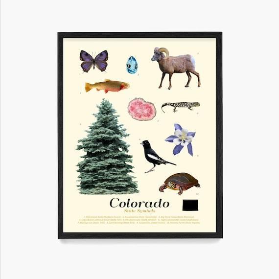 Colorado State Symbols Poster, Colorado Art, Colorado Poster, Colorado Wall Art, Colorado Decor, Colorado Home, Denver Art, Denver Poster