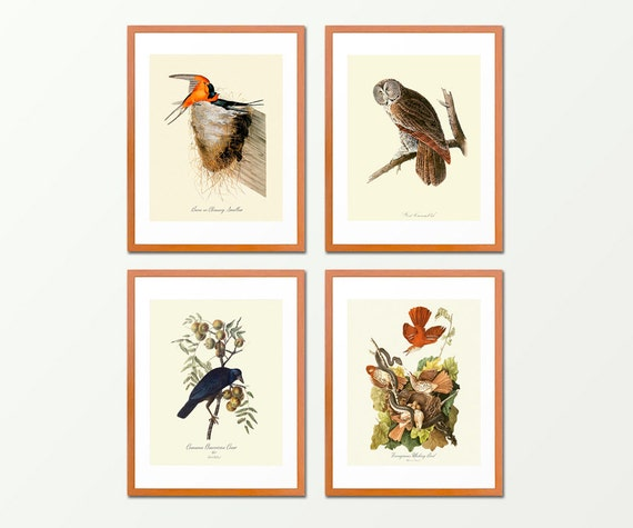 Audubon Birds Suite - Set of 4 Prints - Antique Nature Prints - Bird Art - Natural History Illustrations