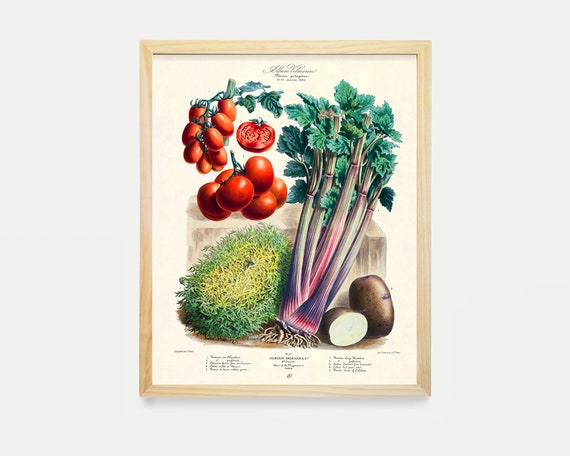 The Vegetable Garden - Garden Art - Garden Illustration - Garden Poster - Kitchen Poster - Kitchen Art - Tomatoes - Food Poster - Food Art