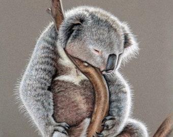Koala Sleep - Fine Art Print