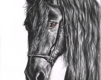 Friesian Horse - Fine Art Print