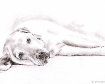 Labrador - Fine Art Print  - Drawing with Sepia charcoal