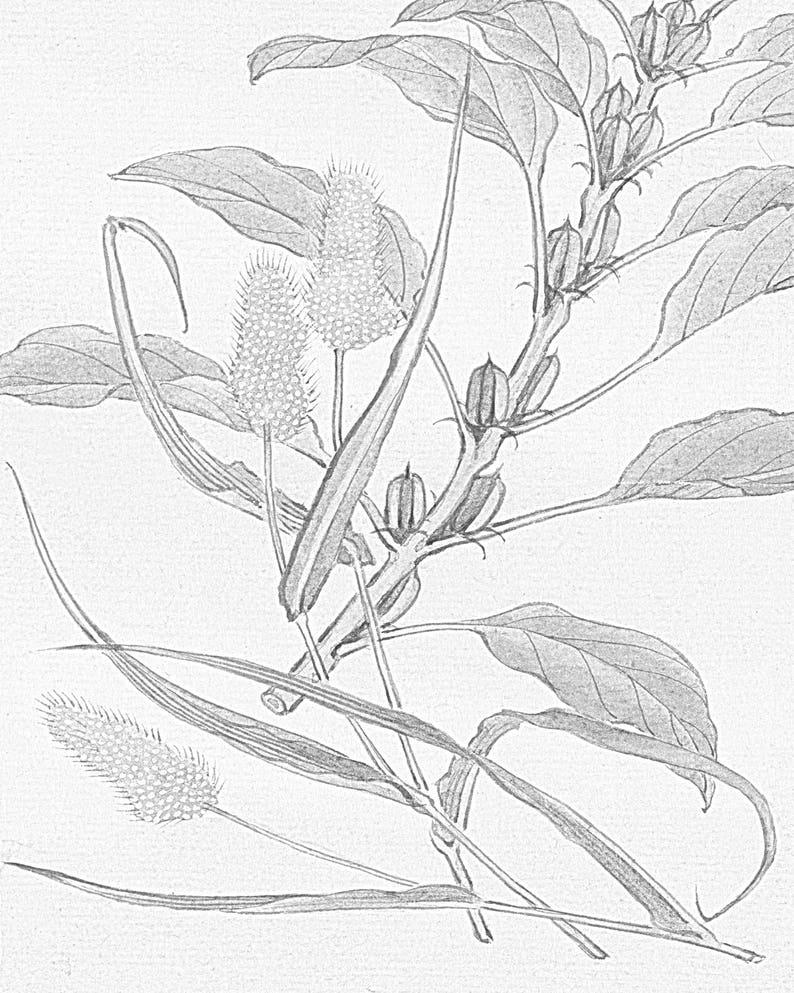 5400 Japanese Flower Coloring Pages , Free HD Download