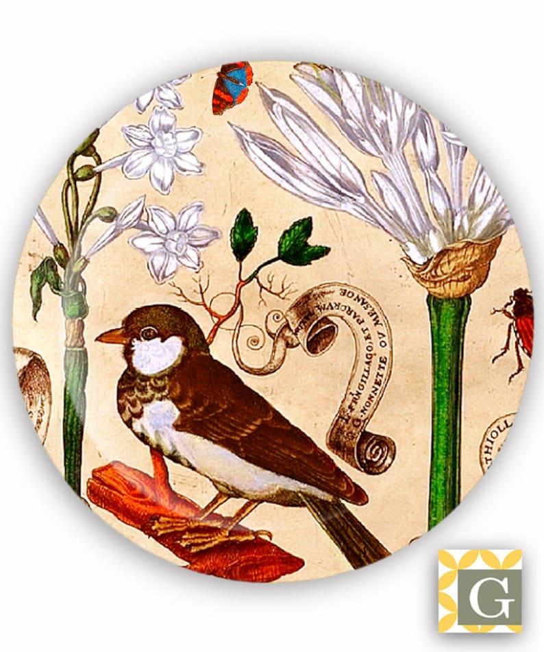 Antique French Botanical No Plate 8 Decorative Plate Melamine Plate Plastic Plate