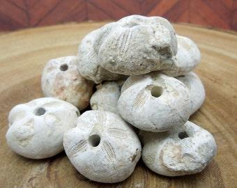 Sand Dollars Fossil Bead - Keyhole Sand Dollar -  (RK2B15-05)