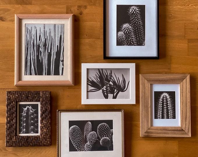 Vintage Framed Cactus Prints found by Willabird Designs Vintage Finds