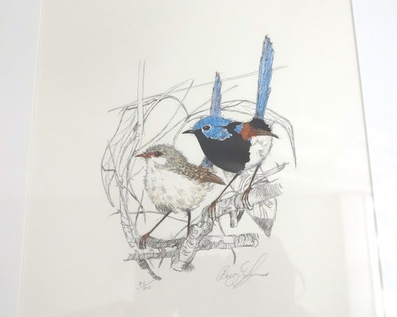 Framed limited edition print of watercolor and pencil painting of wrens, Barry Ingham, Australian wildlife artist, signed, 82 of 100 prints
