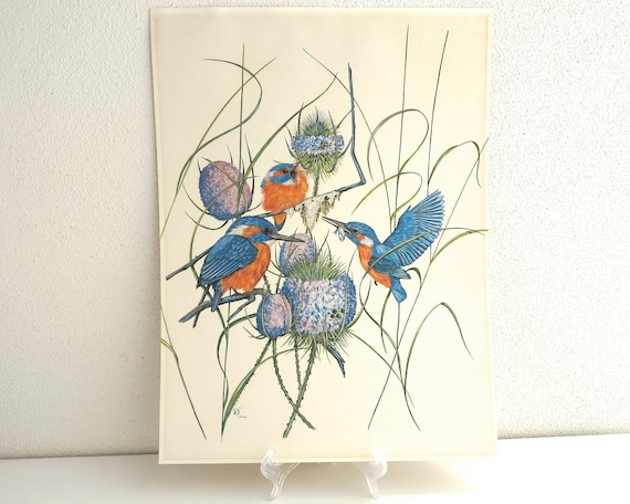 Large vintage print of birds feeding their young, Kingfishers, by Catherine Bouyx, French, finely detailed, 16 x 12 inches / 41 x 30.5 cm