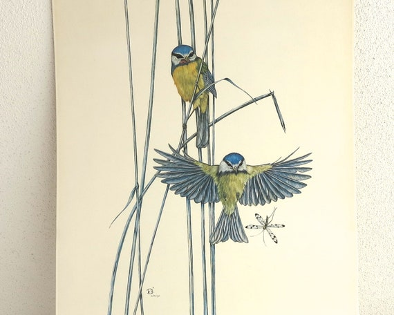Large vintage print of birds and dragonfly by Catherine Bouyx, French, finely detailed, 16 x 12 inches / 41 x 30.5 cm